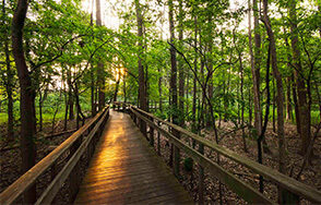 Bridges through the forest